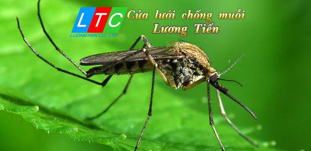 Kinh doanh cửa lưới chống muỗi