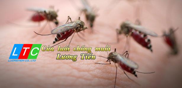 Cửa lưới ngăn muỗi Lương Tiến