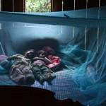 Giải pháp an toàn phòng ngừa virus Zika