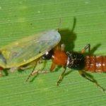 Biện pháp nào để phòng tránh kiến ba khoang?